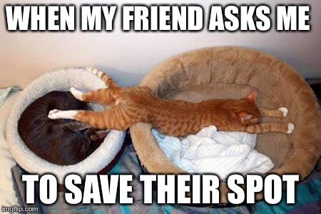 Me everyday! | WHEN MY FRIEND ASKS ME TO SAVE THEIR SPOT | image tagged in sleeping cat | made w/ Imgflip meme maker