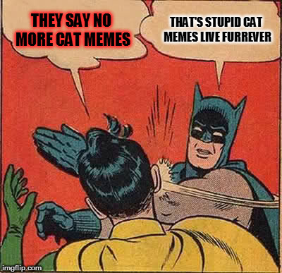 Batman Slapping Robin Meme | THEY SAY NO MORE CAT MEMES THAT'S STUPID CAT MEMES LIVE FURREVER | image tagged in memes,batman slapping robin | made w/ Imgflip meme maker