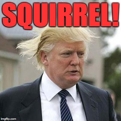 SQUIRREL! | made w/ Imgflip meme maker