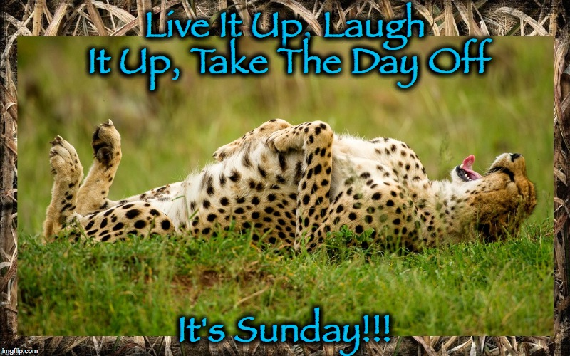 Sunday Chill Time | Live It Up, Laugh It Up, Take The Day Off It's Sunday!!! | image tagged in cheetah | made w/ Imgflip meme maker