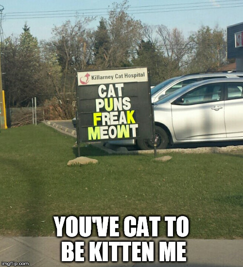 Right meow | YOU'VE CAT TO BE KITTEN ME | image tagged in puns,cat,funny signs | made w/ Imgflip meme maker