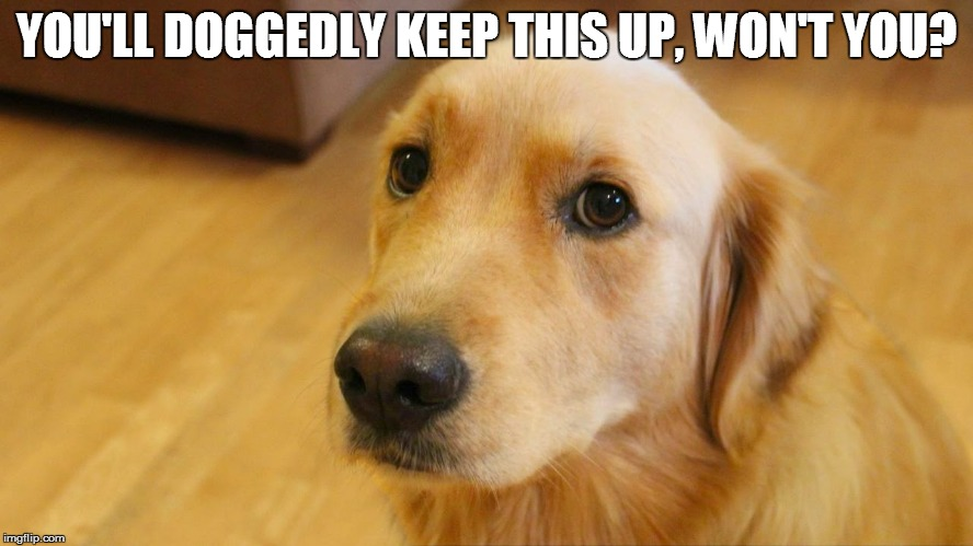 YOU'LL DOGGEDLY KEEP THIS UP, WON'T YOU? | made w/ Imgflip meme maker
