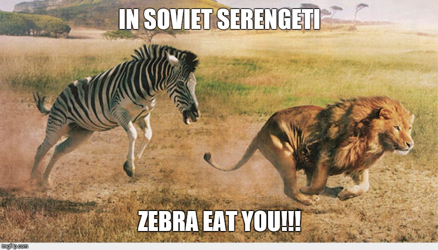 IN SOVIET SERENGETI ZEBRA EAT YOU!!! | image tagged in zebra chasing a lion | made w/ Imgflip meme maker