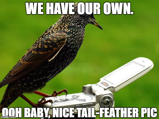 WE HAVE OUR OWN. OOH BABY, NICE TAIL-FEATHER PIC | made w/ Imgflip meme maker