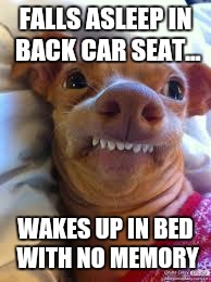 teeth dog | FALLS ASLEEP IN BACK CAR SEAT... WAKES UP IN BED WITH NO MEMORY | image tagged in teeth dog | made w/ Imgflip meme maker