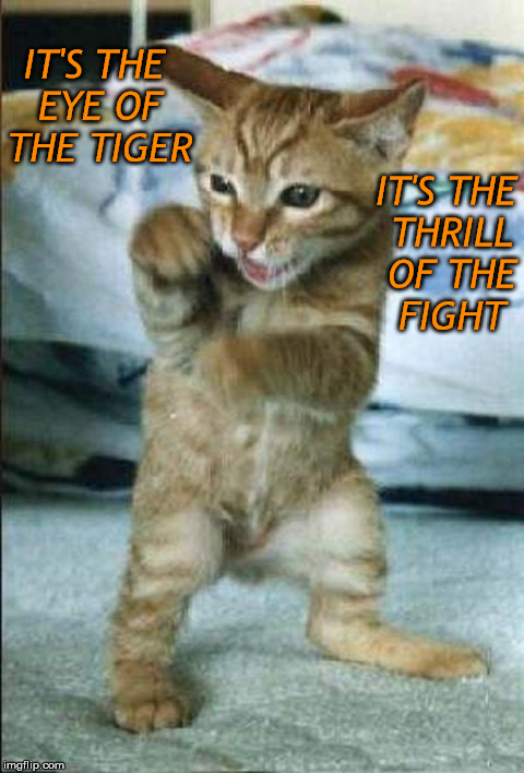 IT'S THE EYE OF THE TIGER IT'S THE THRILL OF THE FIGHT | made w/ Imgflip meme maker