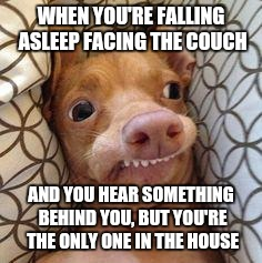 Ph dog | WHEN YOU'RE FALLING ASLEEP FACING THE COUCH AND YOU HEAR SOMETHING BEHIND YOU, BUT YOU'RE THE ONLY ONE IN THE HOUSE | image tagged in ph dog | made w/ Imgflip meme maker