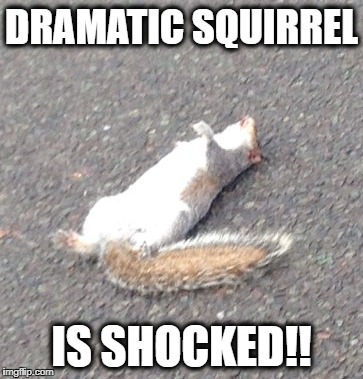 Dramatic Squirrel is Shocked - Imgflip