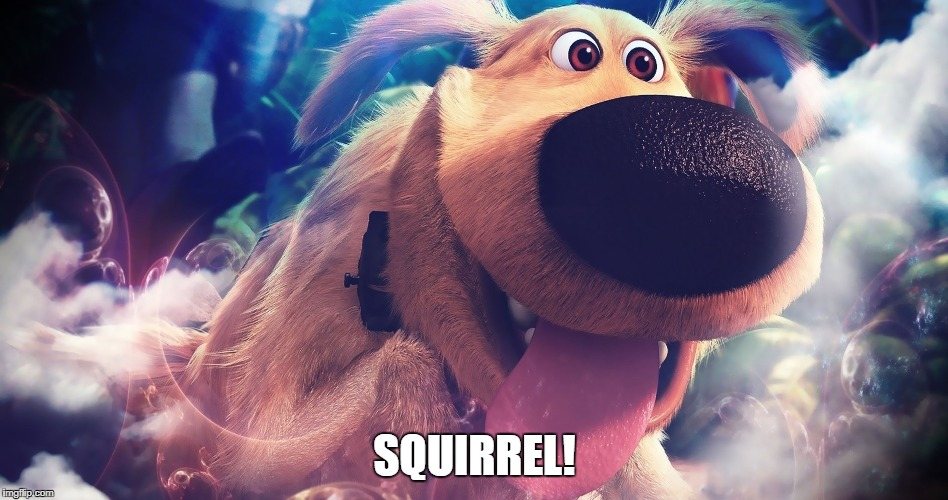 Dug | SQUIRREL! | image tagged in squirrel,dug,up | made w/ Imgflip meme maker