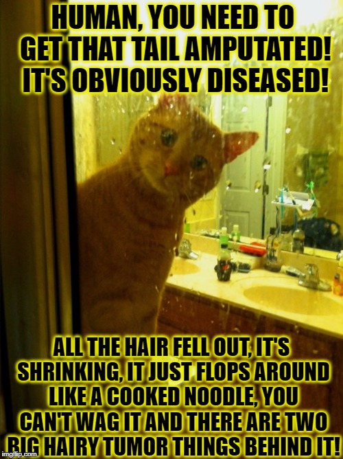 HUMAN, YOU NEED TO GET THAT TAIL AMPUTATED! IT'S OBVIOUSLY DISEASED! ALL THE HAIR FELL OUT, IT'S SHRINKING, IT JUST FLOPS AROUND LIKE A COOK | image tagged in human tail | made w/ Imgflip meme maker