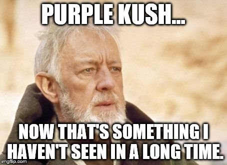 Obi Wan Kenobi Meme | PURPLE KUSH... NOW THAT'S SOMETHING I HAVEN'T SEEN IN A LONG TIME. | image tagged in memes,obi wan kenobi | made w/ Imgflip meme maker