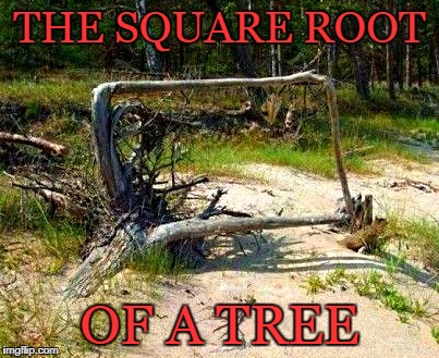 square root of a tree | THE SQUARE ROOT OF A TREE | image tagged in roots,square | made w/ Imgflip meme maker