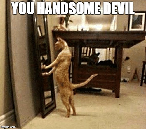you handsome devil | YOU HANDSOME DEVIL | image tagged in funny cats | made w/ Imgflip meme maker