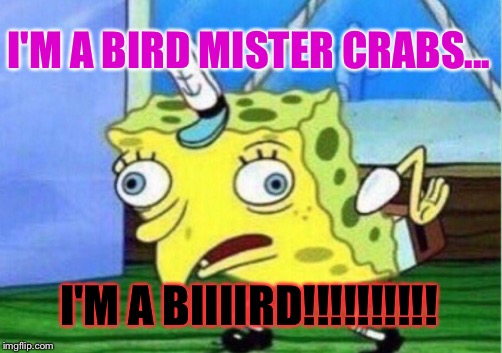 Mocking Spongebob Meme | I'M A BIRD MISTER CRABS... I'M A BIIIIRD!!!!!!!!!! | image tagged in memes,mocking spongebob | made w/ Imgflip meme maker