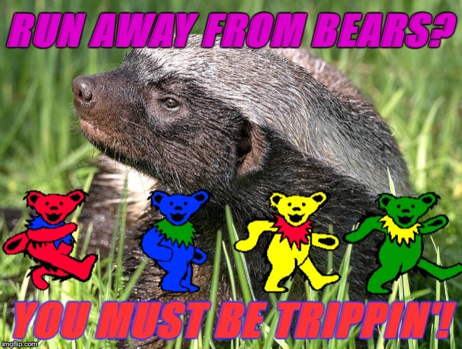 Honey Badger Don't Give a Trip! | . | image tagged in badger bears,honey badger,lsd,grateful dead,tripping,bears | made w/ Imgflip meme maker