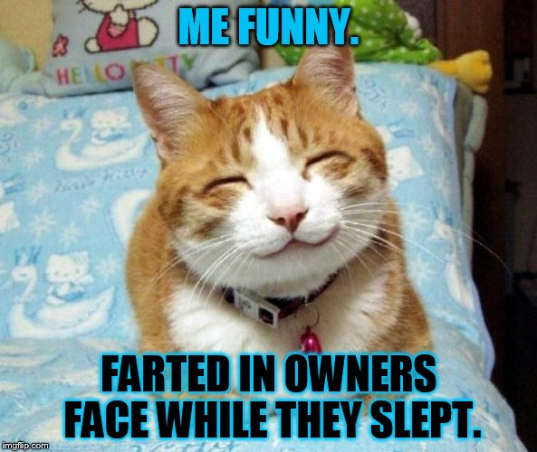 ME FUNNY. FARTED IN OWNERS FACE WHILE THEY SLEPT. | image tagged in cute smiling cat | made w/ Imgflip meme maker