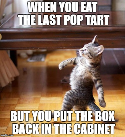 that dude's insane! | WHEN YOU EAT THE LAST POP TART BUT YOU PUT THE BOX BACK IN THE CABINET | image tagged in strutting kitten,memes,funny,pop tarts,cool,dude | made w/ Imgflip meme maker