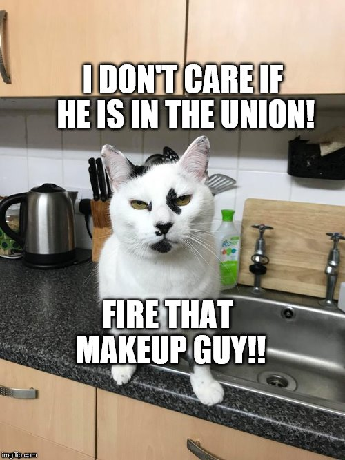 Fire the makeup guy! |  I DON'T CARE IF HE IS IN THE UNION! FIRE THAT MAKEUP GUY!! | image tagged in makeup cat,funny cat memes,cat,cat meme | made w/ Imgflip meme maker