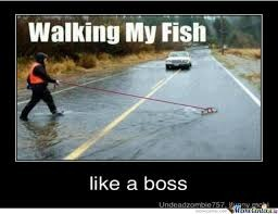 Walking Your Fish Be Like | image tagged in memes,funny,walking my fish,like a boss | made w/ Imgflip meme maker