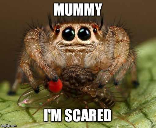 Scared spider | MUMMY I'M SCARED | image tagged in memes,funny | made w/ Imgflip meme maker