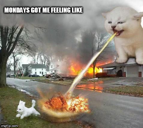 monster cat | MONDAYS GOT ME FEELING LIKE | image tagged in mondays,monday,cats,dogs,attack,monster | made w/ Imgflip meme maker