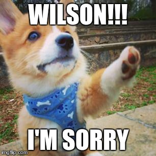 puppy corgi | WILSON!!! I'M SORRY | image tagged in puppy corgi | made w/ Imgflip meme maker