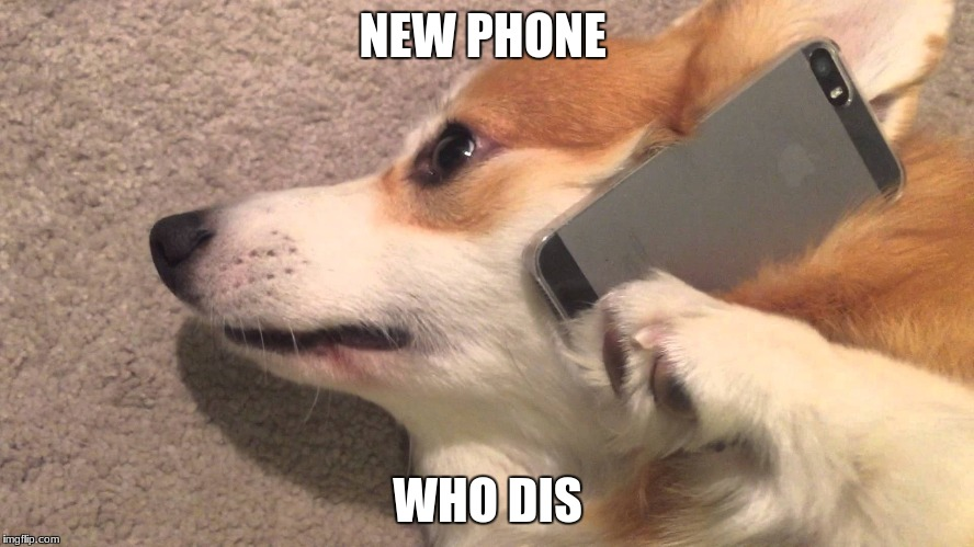 NEW PHONE WHO DIS | image tagged in corgi on the phone | made w/ Imgflip meme maker