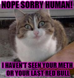 NOPE SORRY HUMAN! I HAVEN'T SEEN YOUR METH OR YOUR LAST RED BULL | image tagged in meth cat | made w/ Imgflip meme maker