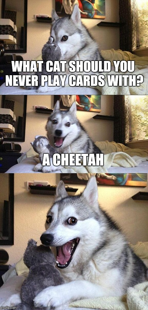 Bad Pun Dog Meme |  WHAT CAT SHOULD YOU NEVER PLAY CARDS WITH? A CHEETAH | image tagged in memes,bad pun dog | made w/ Imgflip meme maker