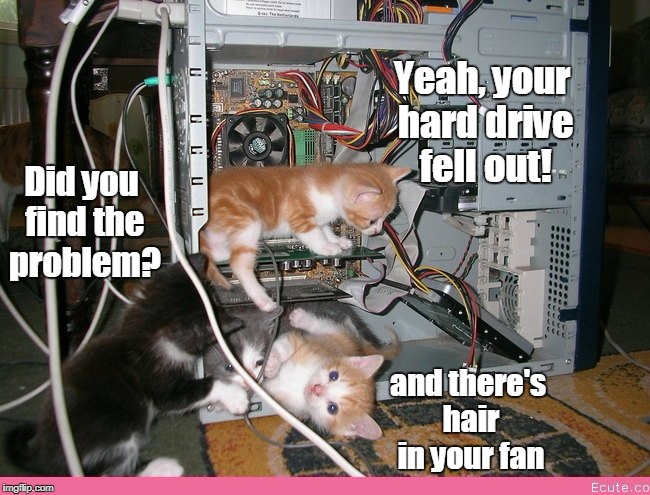 Geek Week-- technic-awww support | Did you find the problem? Yeah, your hard drive fell out! and there's hair in your fan | image tagged in kittens fixing a computer,computer,kittens | made w/ Imgflip meme maker