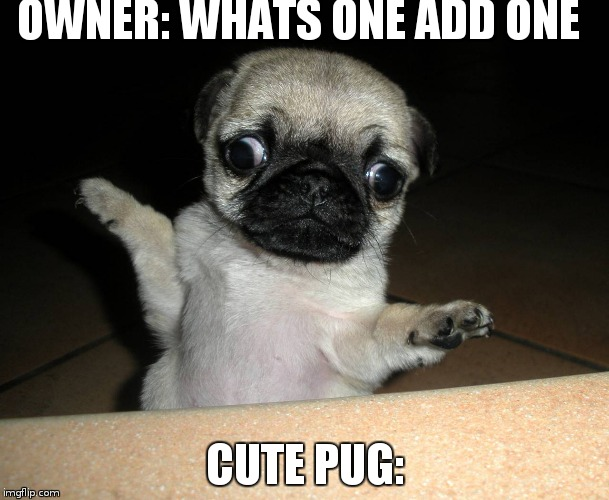 confused pug | OWNER: WHATS ONE ADD ONE CUTE PUG: | image tagged in pugs | made w/ Imgflip meme maker