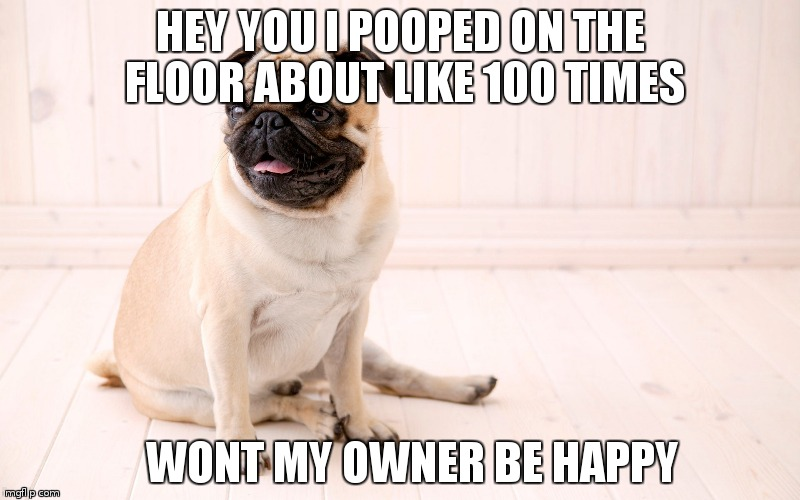 poop pug | HEY YOU I POOPED ON THE FLOOR ABOUT LIKE 100 TIMES WONT MY OWNER BE HAPPY | image tagged in poop on the floor | made w/ Imgflip meme maker