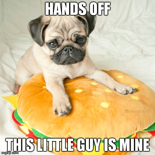 hamburger pug | HANDS OFF THIS LITTLE GUY IS MINE | image tagged in cute pugs | made w/ Imgflip meme maker