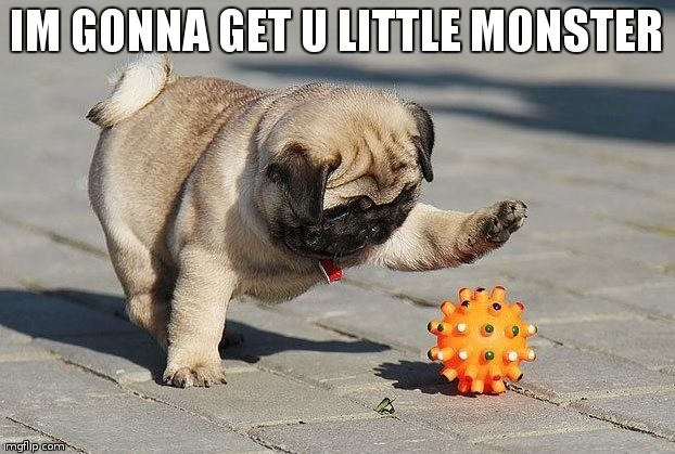 pug police | IM GONNA GET U LITTLE MONSTER | image tagged in cute,pugs | made w/ Imgflip meme maker