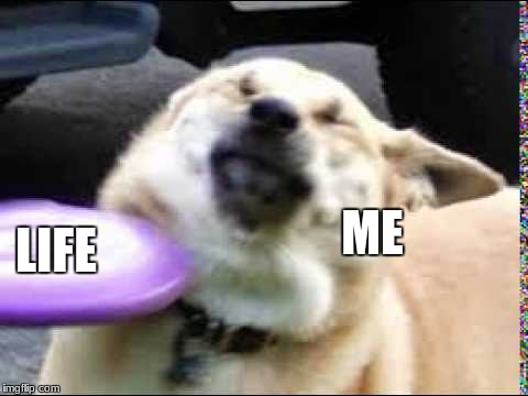 Frisbee doggo | ME LIFE | image tagged in doggo,relatable,my life | made w/ Imgflip meme maker