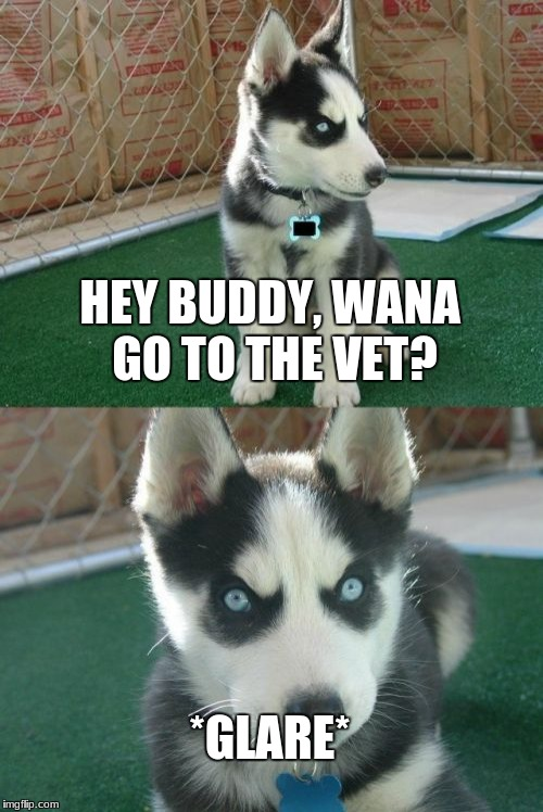 Insanity Puppy Meme | HEY BUDDY, WANA GO TO THE VET? *GLARE* | image tagged in memes,insanity puppy | made w/ Imgflip meme maker