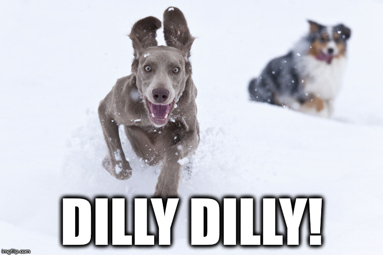 DILLY DILLY! | image tagged in dog2 | made w/ Imgflip meme maker