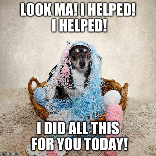 Little helper | LOOK MA! I HELPED! I HELPED! I DID ALL THIS FOR YOU TODAY! | image tagged in funny dogs | made w/ Imgflip meme maker