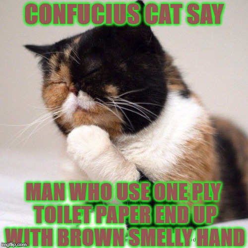 CONFUCIUS CAT SAY MAN WHO USE ONE PLY TOILET PAPER END UP WITH BROWN SMELLY HAND | image tagged in confucius cat | made w/ Imgflip meme maker