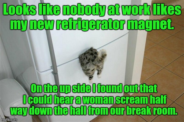 Looks like someone brought in some leftover Chinese.  | Looks like nobody at work likes my new refrigerator magnet. On the up side I found out that I could hear a woman scream half way down the ha | image tagged in funny,cat,refrigerator,magnet | made w/ Imgflip meme maker