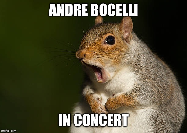 Squirrel opera | ANDRE BOCELLI IN CONCERT | image tagged in squirrel,opra,funny animals | made w/ Imgflip meme maker