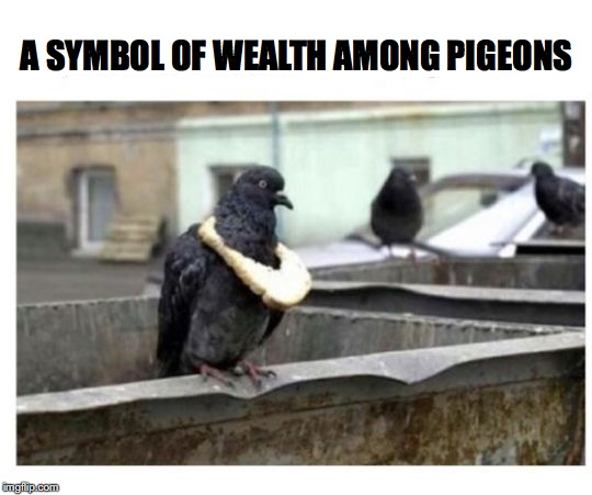 Top of the pecking order | A SYMBOL OF WEALTH AMONG PIGEONS | image tagged in pigeon,relationship status | made w/ Imgflip meme maker
