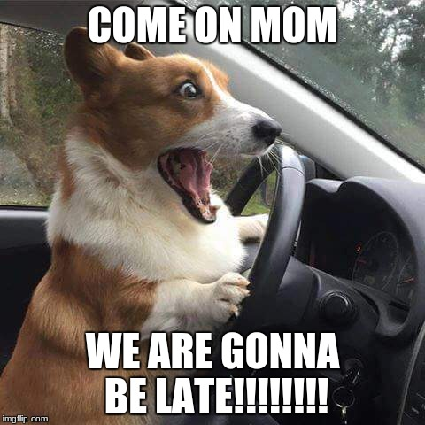 Rage Corgi |  COME ON MOM; WE ARE GONNA BE LATE!!!!!!!! | image tagged in rage corgi | made w/ Imgflip meme maker
