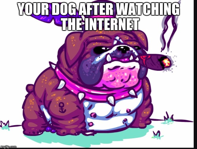 YOUR DOG AFTER WATCHING THE INTERNET | image tagged in doggone | made w/ Imgflip meme maker