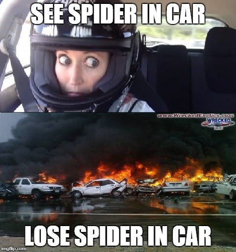 REALITY BE LIKE.... | SEE SPIDER IN CAR LOSE SPIDER IN CAR | image tagged in funny,meme,funny memes,raydog,gif,demotivationals | made w/ Imgflip meme maker