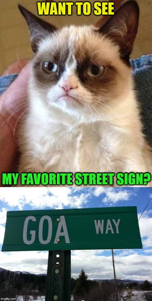 Socrates is doing ''Memes in Review.His favorite 2017 memes from each user on the Top 100 leaderboard'' Please drop in and visit | WANT TO SEE MY FAVORITE STREET SIGN? | image tagged in memes,2017 memes in review,favorites,grumpy cat,socrates,stolen meme | made w/ Imgflip meme maker