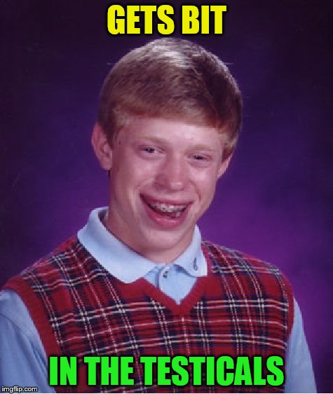 Bad Luck Brian Meme | GETS BIT IN THE TESTICALS | image tagged in memes,bad luck brian | made w/ Imgflip meme maker