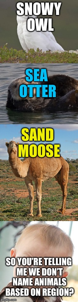 To me it definitely looks like we name based on where a species is | SNOWY OWL SEA OTTER SAND MOOSE SO YOU'RE TELLING ME WE DON'T NAME ANIMALS BASED ON REGION? | image tagged in memes | made w/ Imgflip meme maker