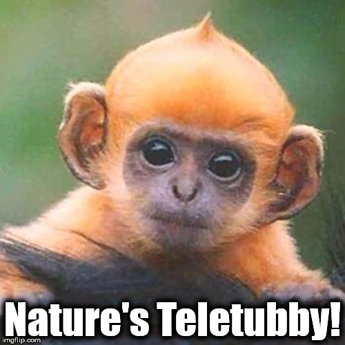 Nature's Teletubby! | image tagged in teletubby | made w/ Imgflip meme maker