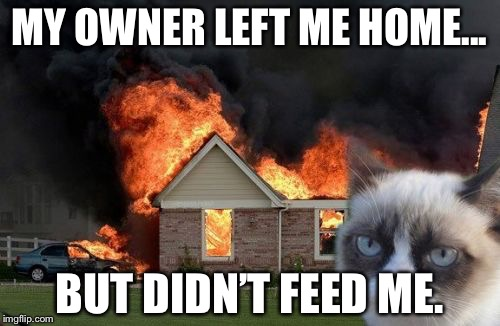 Burn Kitty Meme | MY OWNER LEFT ME HOME... BUT DIDN'T FEED ME. | image tagged in memes,burn kitty,grumpy cat | made w/ Imgflip meme maker